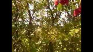 http://www.mathstrength.com- Paducelul -Stapanul inimii -Copac medicinal -Farmacia naturii
