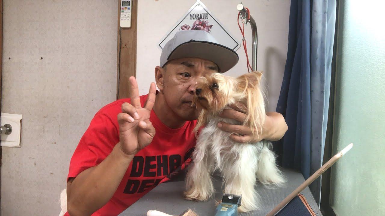 パンちゃん2歳の誕生日Live【ヨークシャーテリア専門犬舎チャオカーネ】