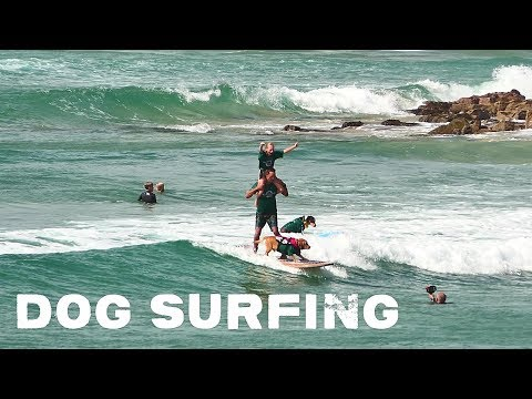 Dog Surfing at the Noosa Festival 2019