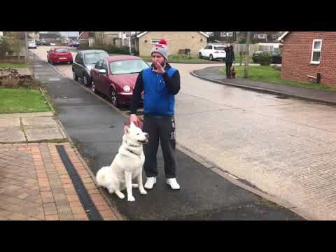 DOG REACTIVE AKITA SESSION 1 PART 1