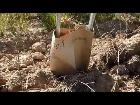 Témoignage d'un Vigneron : Partage et Retour Expérience Greffage dans la Lutte contre l'Esca