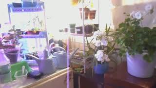 видео Комнатные растения, цветы на балконе, лекарственные растения
