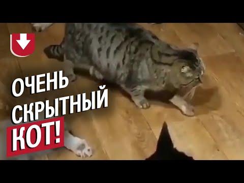 Кот крадется мимо спящих собак!