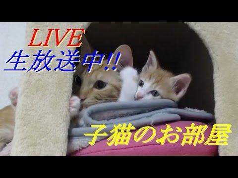 子猫のお部屋 Kitten rooms