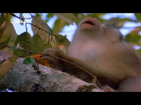National Geographic - Wild World: Borneo (2015) | HD