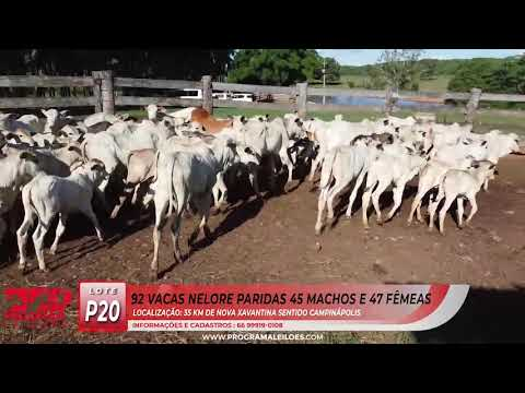 LOTE P20