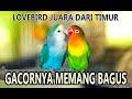 Peternak Burung Labierth Juara  Mp3 - Mp4 Download