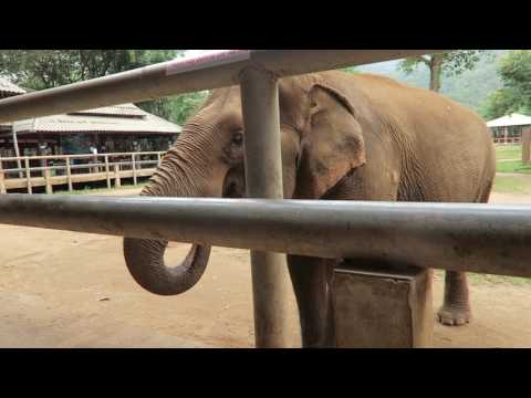Day 2 Elephant Nature Park Chiang Mai Thailand
