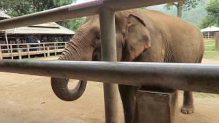 Day 2 Elephant Nature Park Chiang Mai Thailand