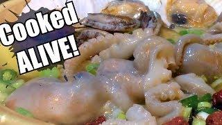 Live octopus in Korea: cruel or delicious?