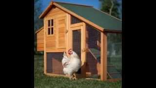 Chicken Coops Plans | Diy Chicken Coops Plans | Must Watch!
