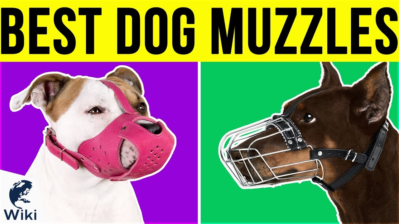 Top 10 Dog Muzzles Of 2019 Video Review