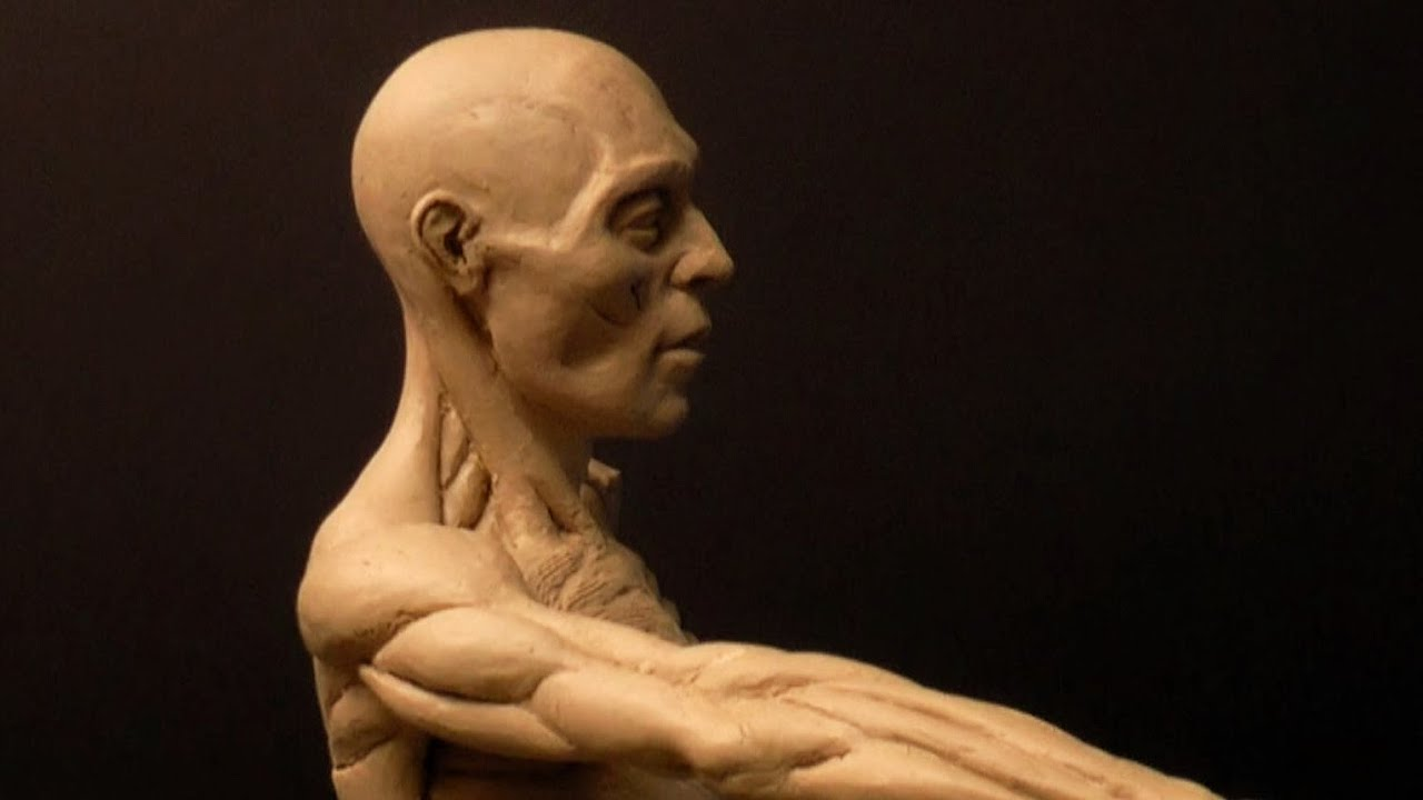 Human Anatomy Sculpture (Ecorche) 25_FD - YouTube