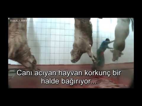 Slaughterhouses in Turkey (1)