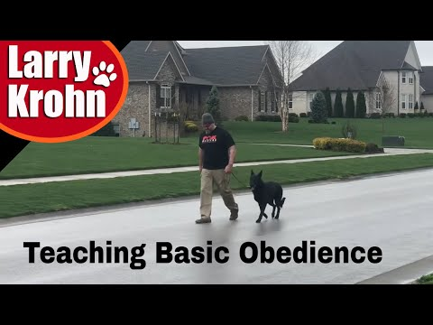 teaching-basic-dog-training-obedience-to-owners