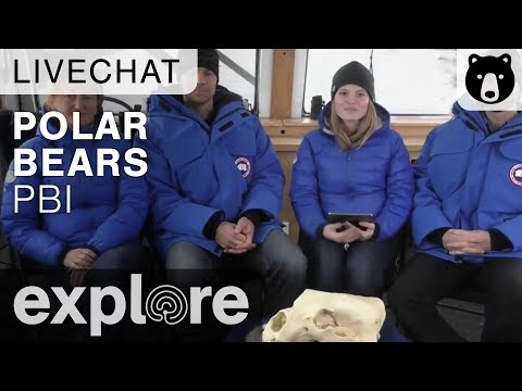 Alysa McCall - Using STEM to Study Polar Bears - Live Chat - 동영상