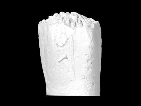 3D digital reconstruction of the early post-metamorphic, Carboniferous blastoid (NIGP 163236)