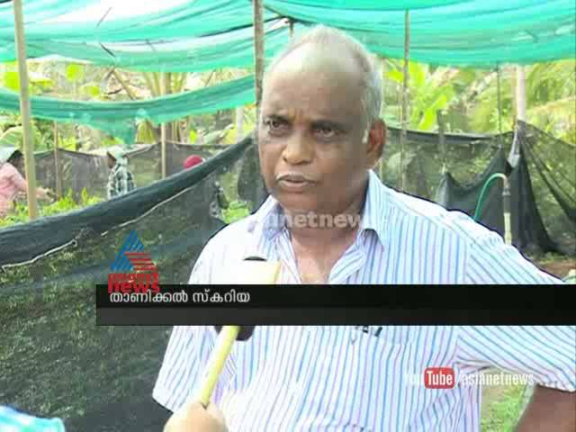 Rubber Falling prices impact sale of saplings employees  Asianet News Investigation