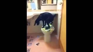 Смешные животные- Собака писает в унитаз