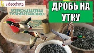 Какой дробью стрелять утку на охоте? Videoohota