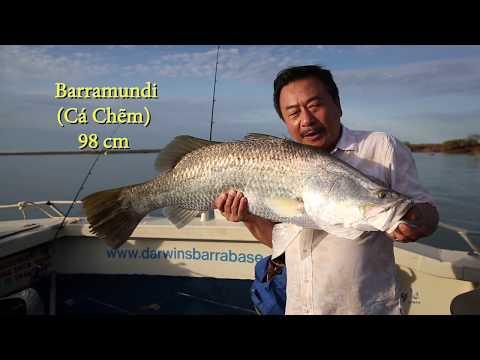 MC VIỆT THẢO- CBL (612)- CÂU CÁ BARRAMUNDI (CÁ CHẼM) 1 TRIỆU ĐÔ Ở DARWIN AUSTRALIA - DEC 4, 2017