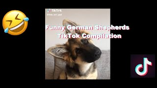 Funny German Shepherd Puppy and Dog TikTok Compilation