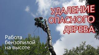 Как спилить аварийное дерево - Работа бензопилой на высоте(Спиливание (удаление) опасного аварийного дерева по частям. Работа арбориста бензопилой на высоте. Дерево..., 2016-06-26T10:31:43.000Z)