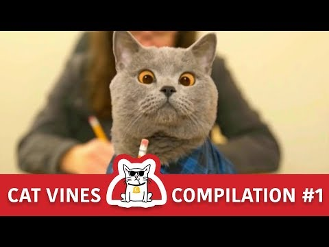 Cat Vines Compilation | Try Not To Laugh