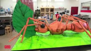 Трёхмерный муравей - Король кондитеров