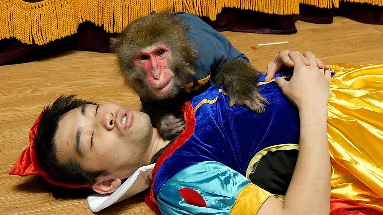 飼い主がキスしないと起きなくなったら、チュー嫌いのお猿さんはどうする?
