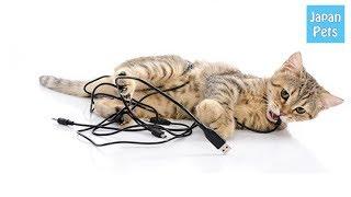 猫の飼い主ならばほとんどの人が経験する電気コードへの噛みつき。特に...