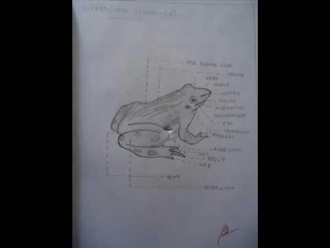 zoology record 2 full youtube rh youtube com Zoology Colleges Zoology Careers