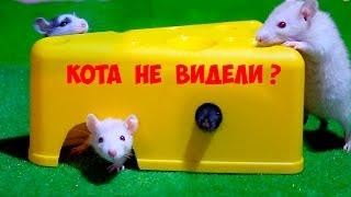 СКАЗКА Нет ли там кота? Крысята в сыре домике #2 Любимые питомцы