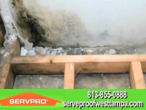 Servpro Of West Tampa  Tampa, FL