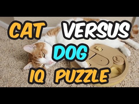 CAT CHALLENGED WITH DOG IQ PUZZLE