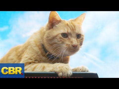 What Nobody Realized About Goose The Cat In Captain Marvel