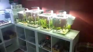 Die Zuchtbecken unseres Aquafreaks Mitglieds Isabella Keim von unserem Partnershop Crazy Shrimps