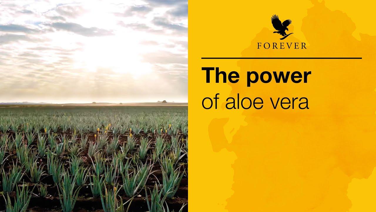 The Power of Aloe Vera | Forever Living #TheAloeVeraCompany