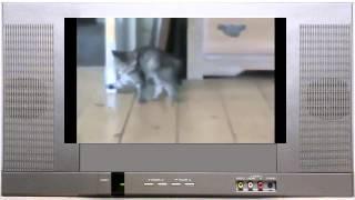 Смешные животные. Игры котенка Funny Cat Videos