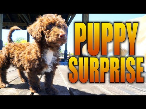 SURPRISING HER WITH A NEW PUPPY (8 WEEKS OLD)