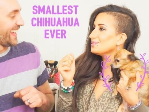 Carlos the Smallest Chihuahua has a birthday party!! May 4,2016