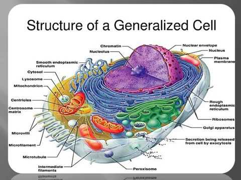Ace Human Anatomy Physiology Unit On Cytology Youtube