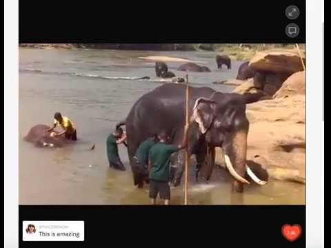 Elephant Spa in a river, Sri Lanka