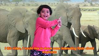 Elephant Facts for Kids | Interesting things about Elephants