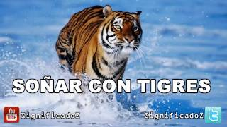 Significado de Soñar con Tigres  🔞 ¿Que Significa?