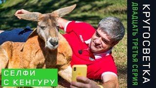 Кругосветка 23. Австралия. Селфи с кенгуру и коалой. Лучший устричный бар в Сиднее