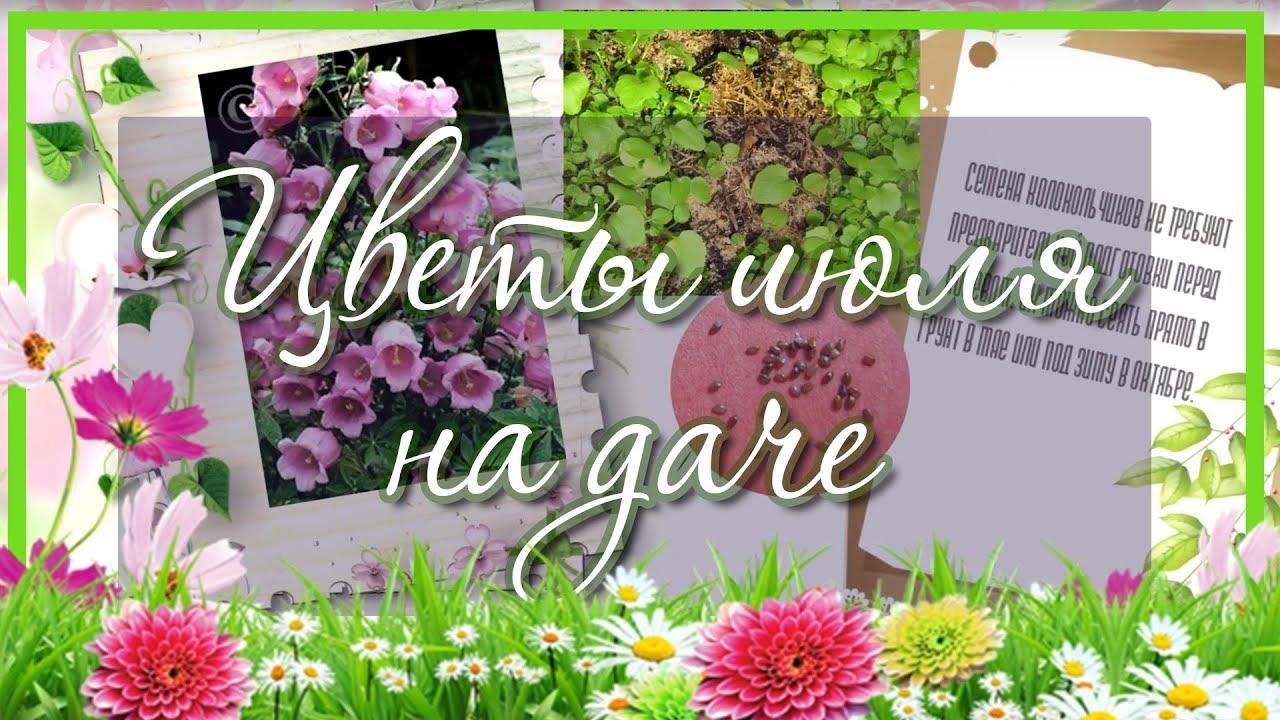 Какие цветы посадить в июле на даче