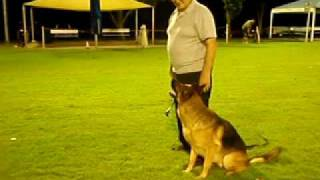 Brisbane Centre For Dogs - Obedience Training (gil And Leo_