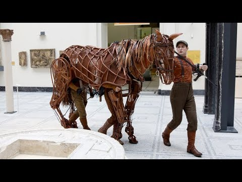 Joey From War Horse