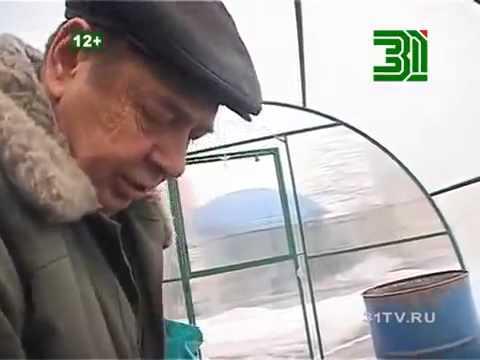 видео: Томаты без рассады